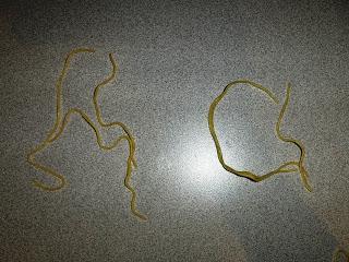 Letter Noodles