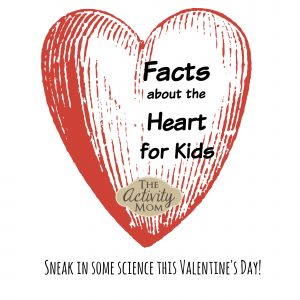 Facts about the Heart for Kids