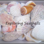 Seashell Activities