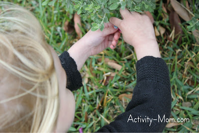 Nature Walk Activities for Your Kids