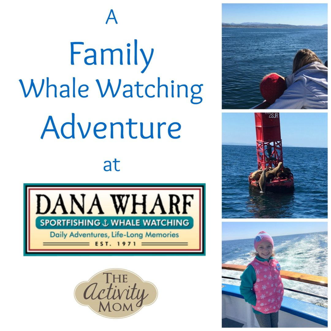 A Family Whale Watching Trip