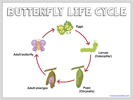 Montessori Fish Life Cycle Diagram Enthusiast Wiring Diagrams