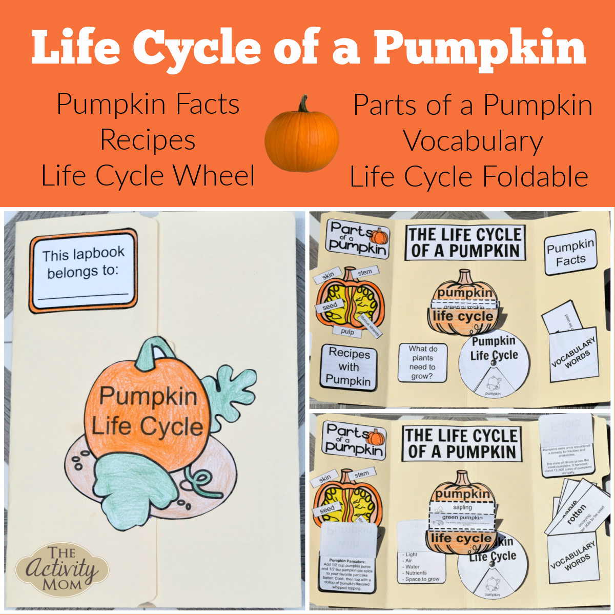 Pumpkin Life Cycle Printables