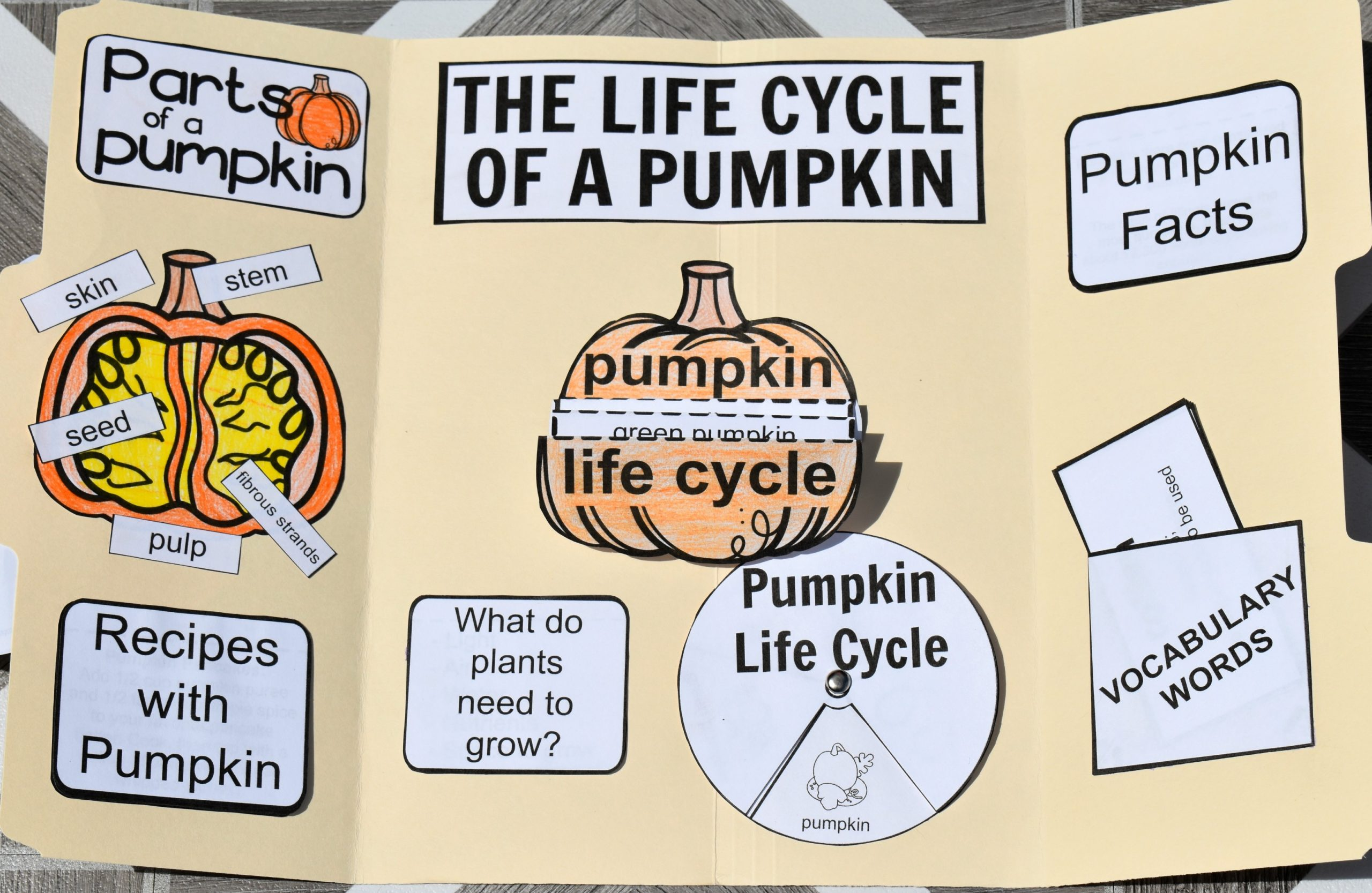 Life Cycle of a Pumpkin Printable Lapbook FREE