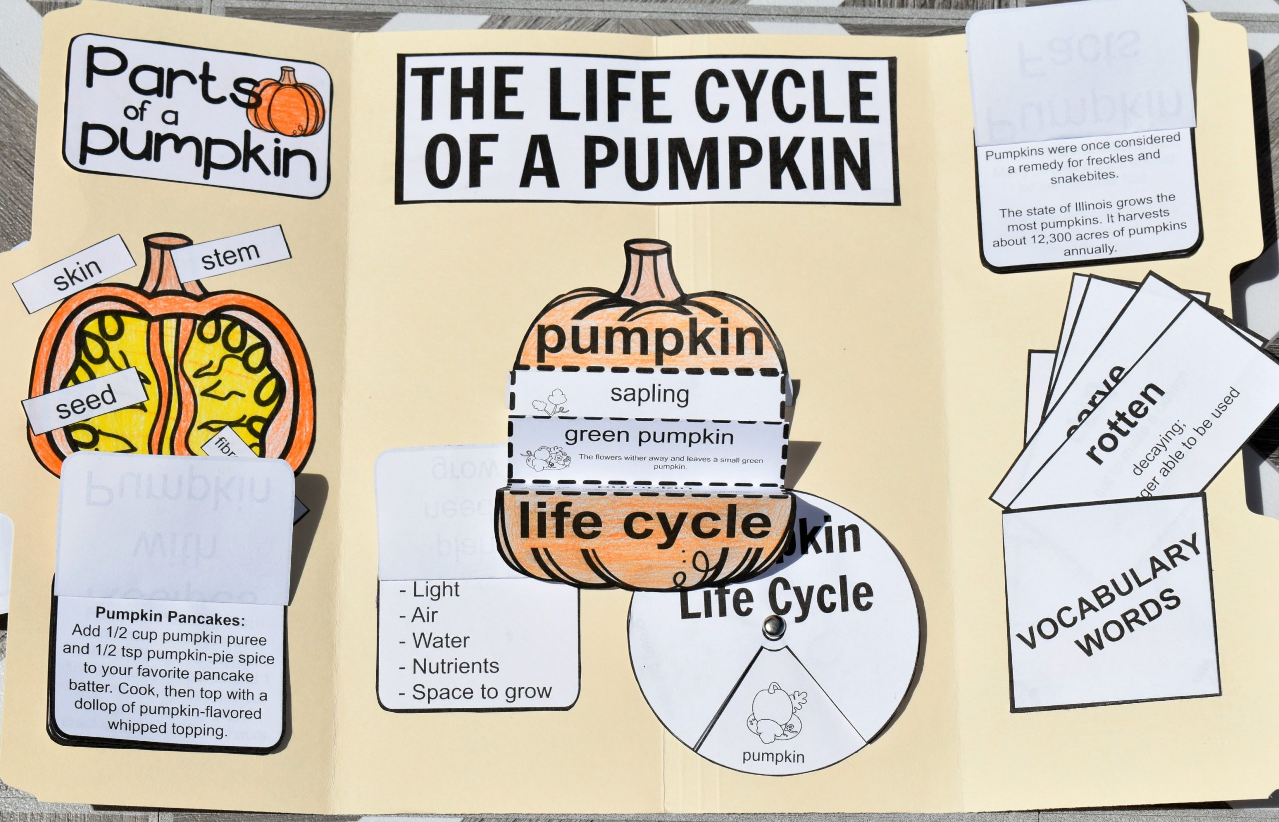 Life Cycle of a Pumpkin Lapbook FREE Printable