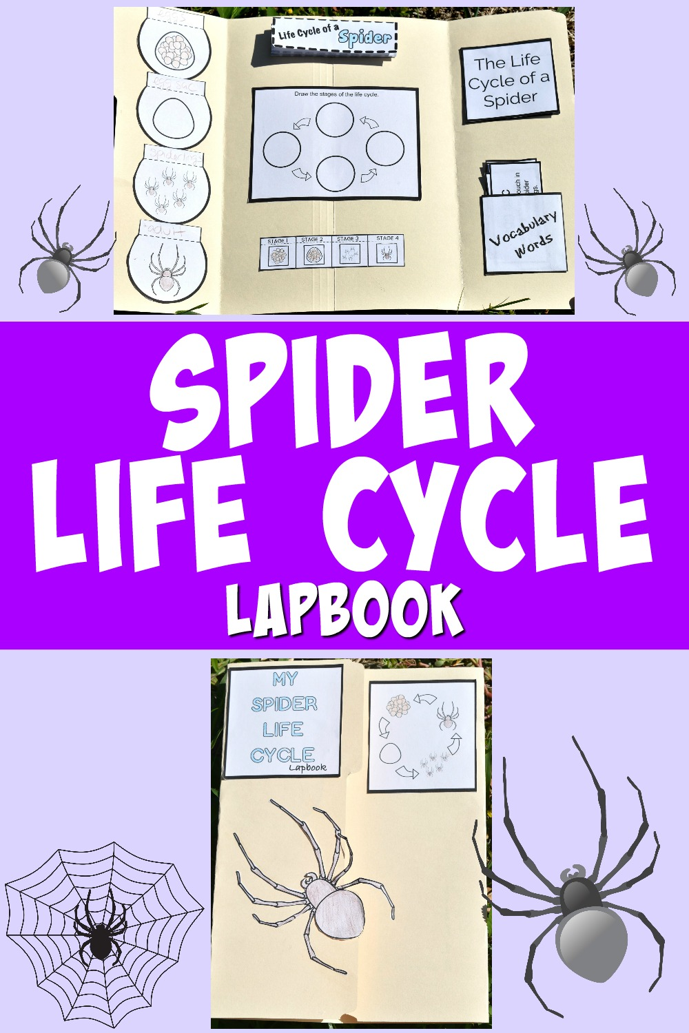 Life Cycle of a Spider FREE Printables